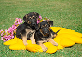 PUP 15 FA0018 01