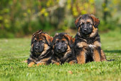 PUP 15 GL0002 01