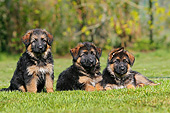 PUP 15 GL0003 01