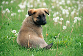 PUP 15 GR0013 01