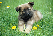 PUP 15 GR0014 01