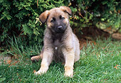 PUP 15 GR0016 01