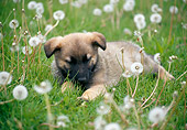 PUP 15 GR0021 01