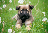PUP 15 GR0022 01