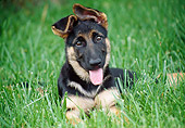 PUP 15 GR0026 01