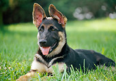 PUP 15 GR0027 01