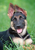 PUP 15 GR0029 01