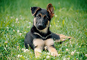 PUP 15 GR0030 01