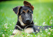 PUP 15 GR0031 01