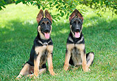 PUP 15 GR0040 01