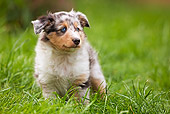 PUP 15 JE0002 01
