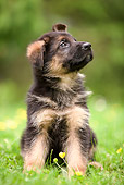 PUP 15 JE0005 01