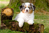 PUP 15 JE0013 01