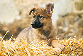 PUP 15 JE0017 01