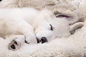 PUP 15 JE0021 01