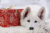 PUP 15 JE0024 01