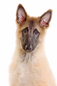 PUP 15 JE0027 01