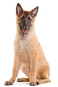 PUP 15 JE0028 01