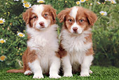 PUP 15 JE0032 01