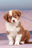 PUP 15 JE0038 01