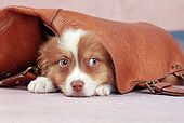 PUP 15 JE0040 01