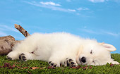 PUP 15 JE0041 01