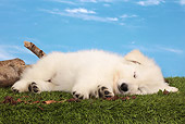 PUP 15 JE0042 01
