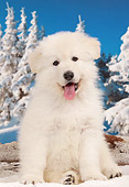 PUP 15 JE0043 01