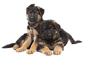 PUP 15 JE0044 01