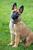 PUP 15 JS0001 01