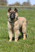 PUP 15 NR0004 01