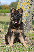 PUP 15 NR0008 01