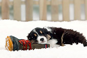 PUP 15 PE0002 01