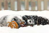 PUP 15 PE0003 01
