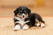PUP 15 PE0006 01
