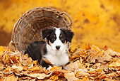 PUP 15 PE0011 01