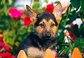 PUP 15 RK0032 04