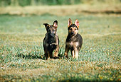 PUP 15 RK0056 03
