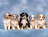 PUP 15 RK0099 01