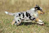 PUP 15 SS0001 01