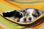 PUP 15 SS0002 01