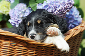 PUP 15 SS0003 01