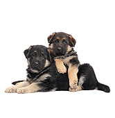 PUP 15 XA0001 01