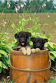 PUP 15 CE0005 01