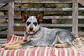 PUP 15 CE0008 01