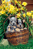 PUP 15 CE0009 01
