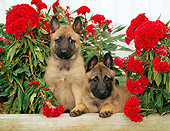 PUP 15 CE0013 01