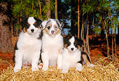 PUP 15 CE0014 01