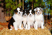 PUP 15 CE0015 01