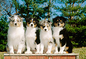 PUP 15 CE0016 01